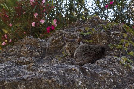 Stray cat lying on a rock