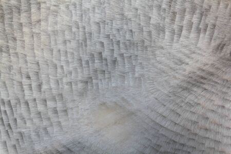 Animal skin texture for background Stok Fotoğraf