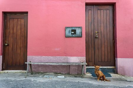 Dog sitting on the street in front of the front door