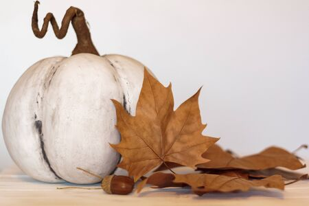 White pumpkin, dry leaves and acorn. Autumn concept