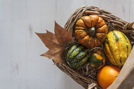 Wicker basket with variety of pumpkins on rustic white table Фото со стока