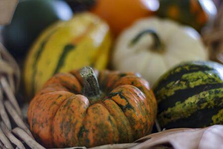 Harvest pumpkins on basket Stok Fotoğraf