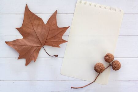 Top view of dry leaf, sycamore balls and blank page with copy space Фото со стока