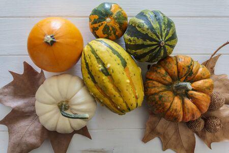 Top view of variety of colorful pumpkins Фото со стока