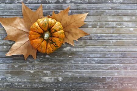 Top view of pumpkin and autumnal leaves on blue background with copy space Stok Fotoğraf