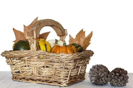 Assortment of pumpkins in basket and cone pines on white wooden table Фото со стока