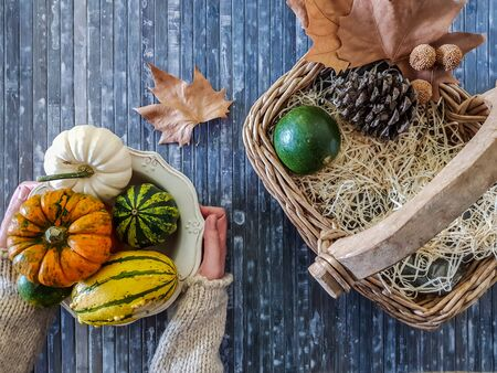 Top view of autumn composition. Woman holding a vintage bowl with assorted pumpkins, dry leaves, pine cones and wicker basket on blue background