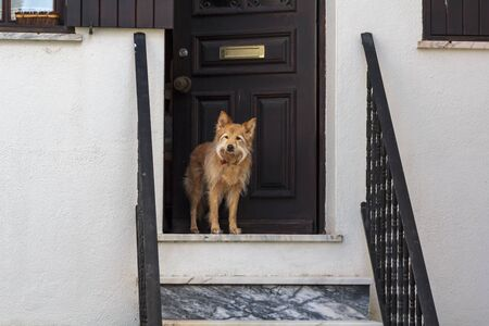 Dog guarding the house door