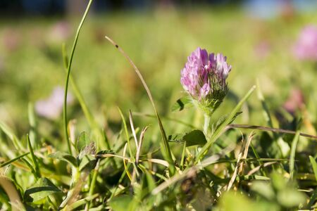Close up of grass and pink flower Stock Photo