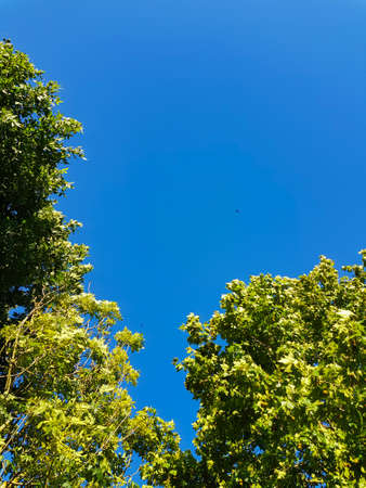 Blue sky and green trees with copy space