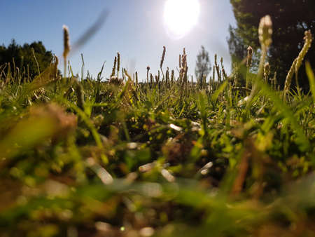 Low angle view of Green grass field on a sunny day Reklamní fotografie