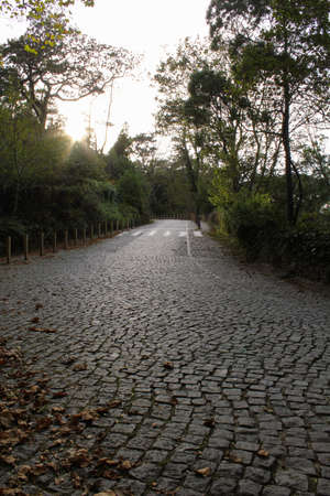 Tree lined cobbled street on autumn day