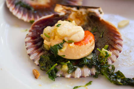 Variegated scallop ready to eat