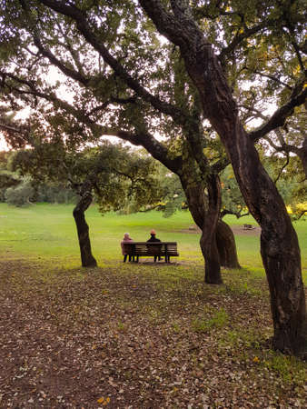 Elderly couple sitting on park bench Standard-Bild