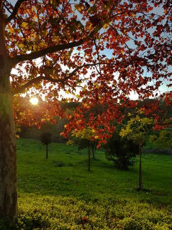 Autumn park in sunny day Standard-Bild