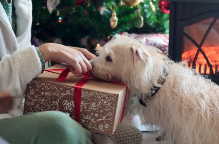Woman unwrapping Christmas present with her dog by the Christmas tree