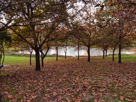 Autumn park with trees and fallen leaves Standard-Bild