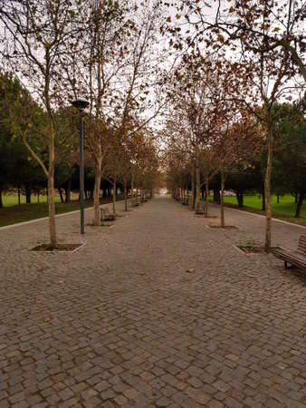 Park path on a autumn day