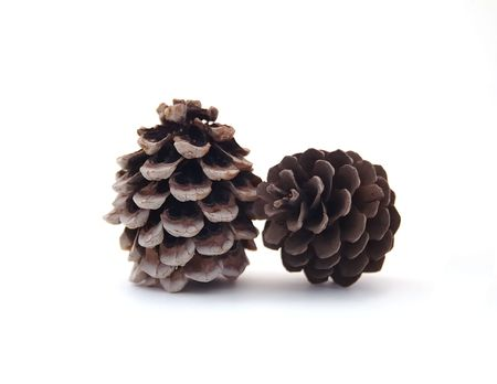 Two pine cones isolated on white background photo