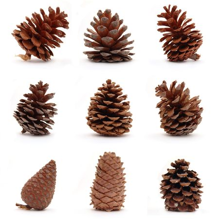 Set of nine different cones isolated on white background photo