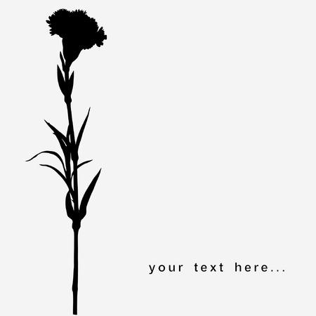flower.Carnation