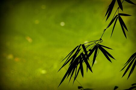 Bamboo leaves silhouettes over green background photo