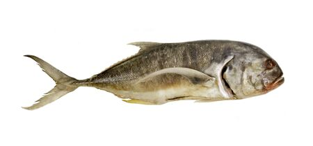 gills: Whole raw fish isolated over white background Stock Photo