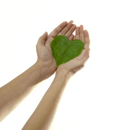 Isolated hands holding a heart shaped green leaf photo