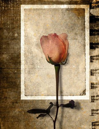 Vintage rose in grunge paper background Stock Photo