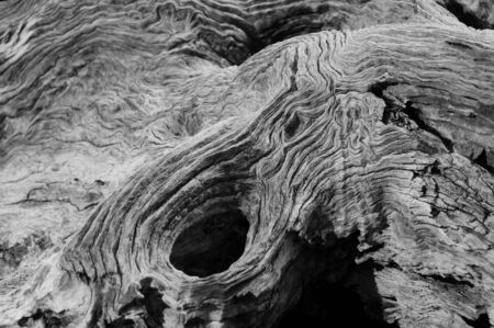 말린 된 나무 줄기의 추상적 인 배경 무늬 스톡 콘텐츠