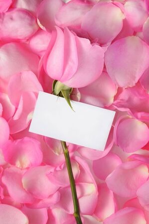 Romantic background with rose, petals and empty white tag