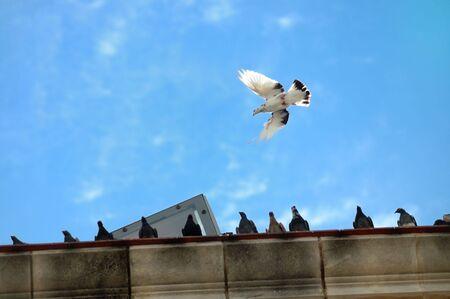 White dove flying against blue sky background photo