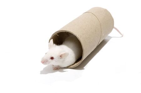 running nose: White mice isolated over white