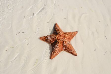 A view of starfish over sand texture on tropical beach - cuba photo