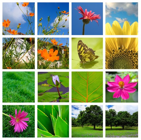 Collage of spring flowers and nature made from 10 pictures photo