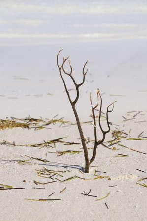 sealife: Detail von Sealife Korallen auf dem Sand mit Algen Lizenzfreie Bilder