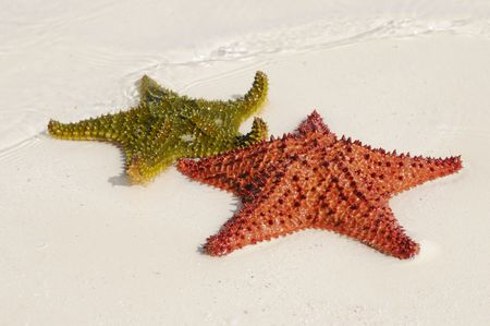Two starfishes in green and orange over the sand  photo