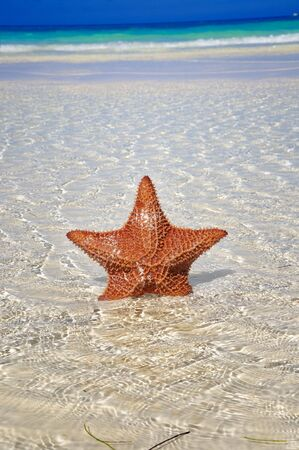 Detail of big starfish on shallow water of tropical beach photo