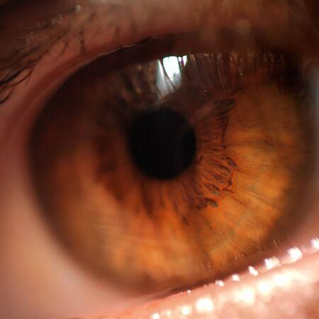 hazel eyes: Disparo de macro de detalle de los ojos humanos avellano