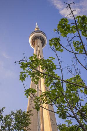 Detail of the CN Tower with maple tree leaves against blue sky