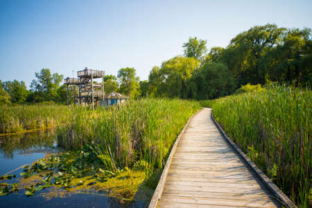 walk board: Wooden board walk and lookout on Pelee point conservation area, Ontario, Canada