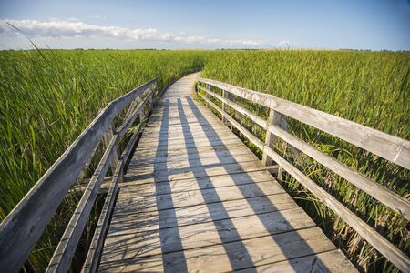 walk board: Wooden board walk on Pelee point conservation area, Ontario, Canada Stock Photo