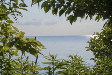 erie: A view of lake erie from Point Pelee National Park in Ontario, Canada.