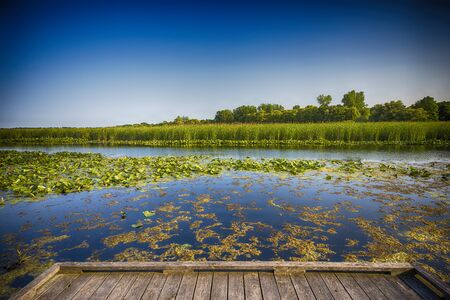 wetland conservation: Wetland landscape on Point Pelee conservation area in Ontario, Canada