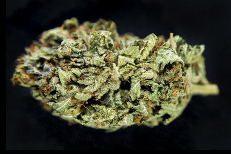 ganja: Macro detail of a cannabis bud  Special K (hybrid) isolated over black background Stock Photo