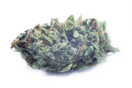 """marihuana: Detalle macro de la yema de marihuana """"Special K"""" (h�brido) aislado m�s de fondo blanco Foto de archivo"""
