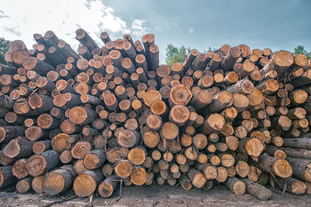 Pine logs stacked at lumber mill in Ontario, Canada