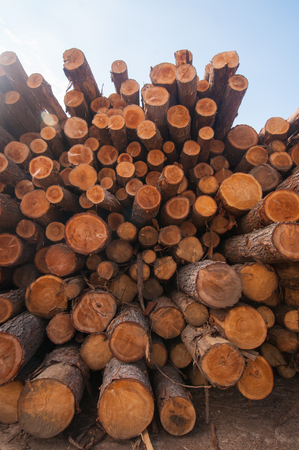 lumber mill: Pine logs stacked at lumber mill in Ontario, Canada