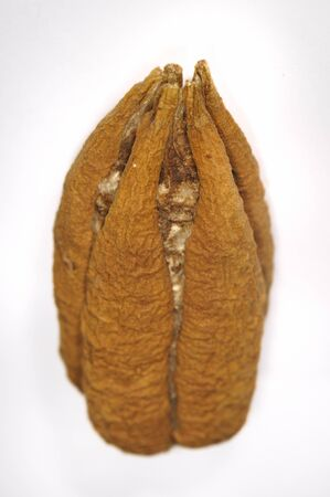 tree detail: Detail of cuban ceiba tree seed isolated over white