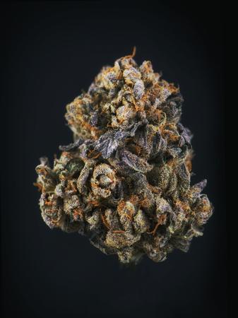 Single cannabis bud (berry noir strain) isolated on black - Medical marijuana background